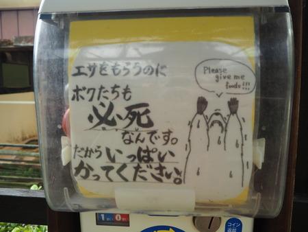 65-長崎バイオパーク アライグマP6051425