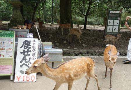 8-奈良公園DSC09109