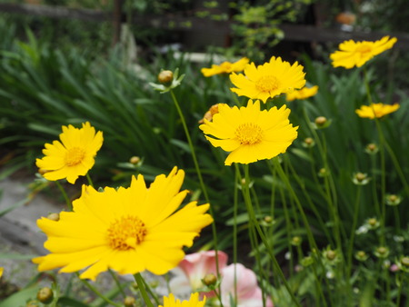 18-諫早市栗面町 Mai's garden P5171440