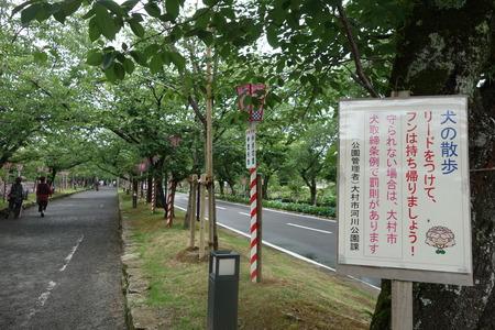 25-大村公園 花菖蒲DSC07644