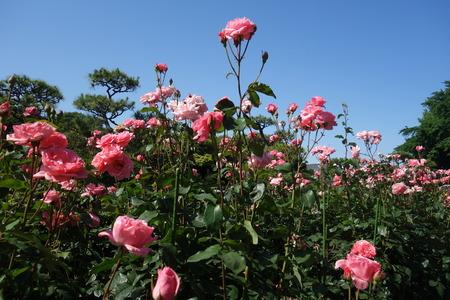 11−平塚市総合公園DSC02461