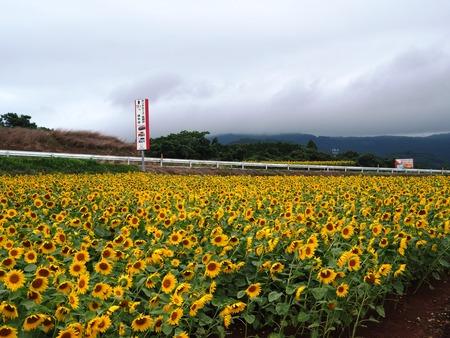 25-愛野町 国道沿いP7214088