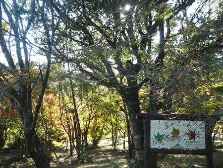 42-29-25-10-雲仙温泉ガストロノミーウォーキングPB140835