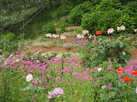 10-諫早市栗面町 Mai's garden P5171382
