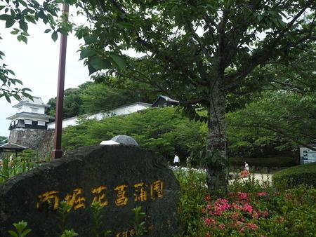 20-大村公園 花菖蒲PP5310117