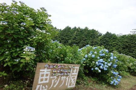 10−諫早市森山町 恵あじさい園DSC02740