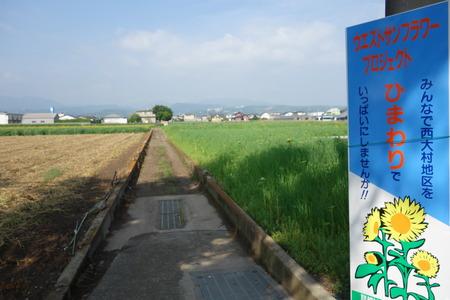3-大村市ひまわりDSC01285