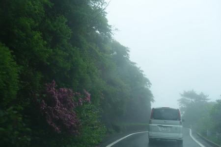 7-雲仙 仁田峠 ミヤマキリシマDSC06759