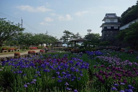 2-大村公園菖蒲DSC01342