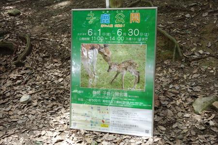 9-奈良公園DSC09113