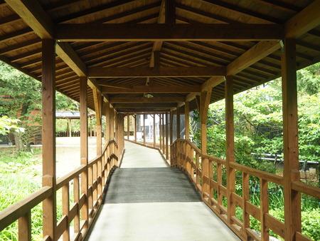 23-東彼杵町 そのぎ茶温泉 里山の湯宿 つわぶきの花P5310439