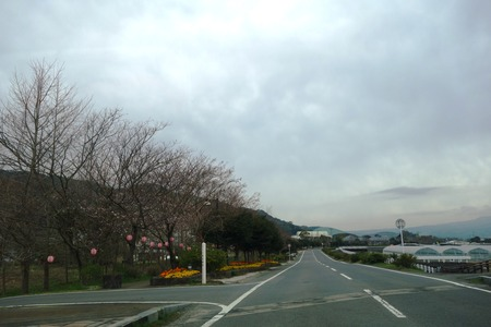 1-森山町 桜DSC00961