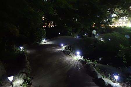 5-諫早公園 蛍DSC05842