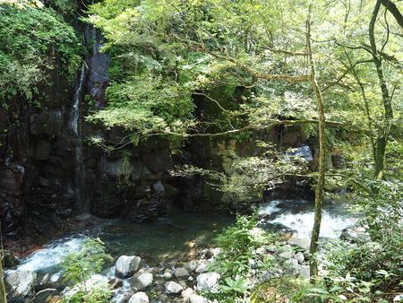 4-東彼杵町 滝の上の猫P8010267