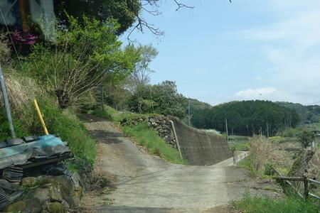 14-大村市鈴田峠千本桜DSC05931