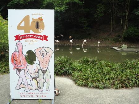 42-長崎バイオパーク フラミンゴP6051157