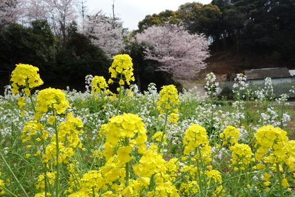 13-上須の瀬バス停DSC04609