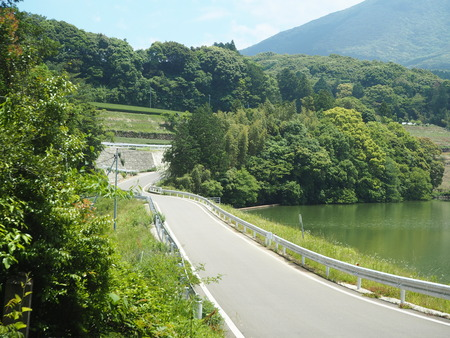 9-東彼杵町 そのぎ茶温泉 里山の湯宿 つわぶきの花P5310216