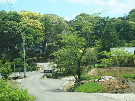 14-東彼杵町 そのぎ茶温泉 里山の湯宿 つわぶきの花P5310225