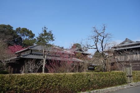 14-国見町神代小路 緋寒桜の郷まつりDSC00392