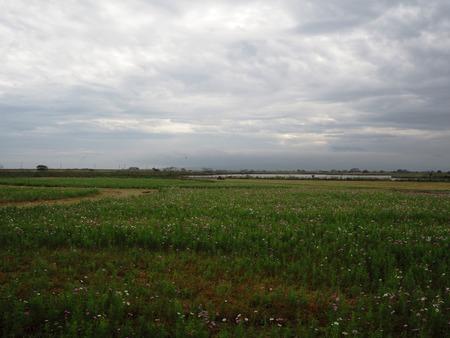 4−諫早市高来町 コスモス畑PA181749