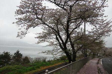 2−多良見町 古川の桜並木DSC01973
