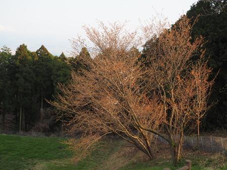 15-3-2-長崎県諫早市 白木峰高原P3180344