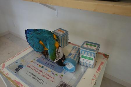 21-ふわふわインコDSC08913