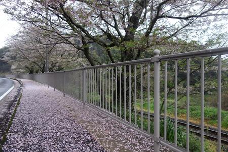 8−多良見町古川の桜並木DSC02012