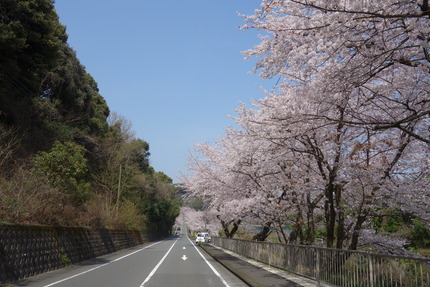 1-多良見町古川の桜DSC04047
