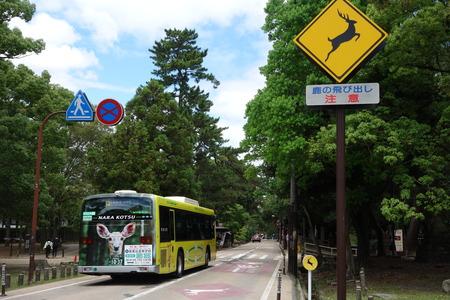 4-奈良公園DSC09089