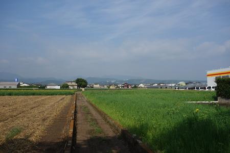 6-大村市ひまわりDSC01252