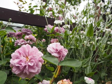 19-諫早市栗面町 Mai's garden P5171441