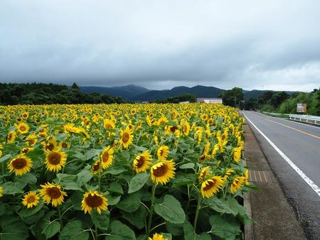 26-愛野町 国道沿いP7214125