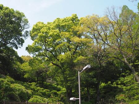 2021.04.10 諫早公園、高城神社、上山つつじ園P4105871