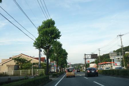 1-ポムの樹DSC09850