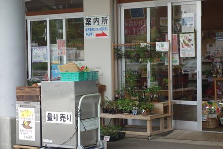 5-山茶花高原DSC07631