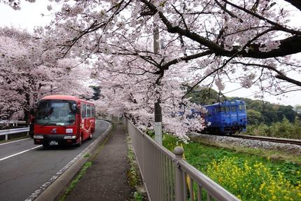 25-多良見古川の桜DSC04407
