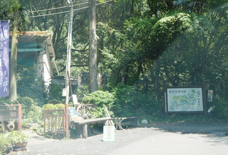 8-東彼杵町 滝の上の猫P8010179