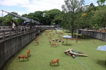 10-奈良公園DSC09165