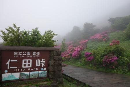 21-雲仙 仁田峠 ミヤマキリシマDSC06831