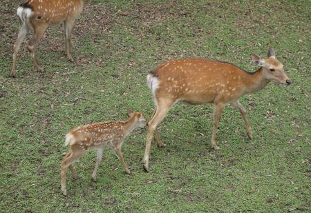 16-奈良公園DSC09152