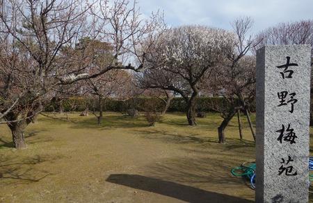 7-島原梅園DSC09506