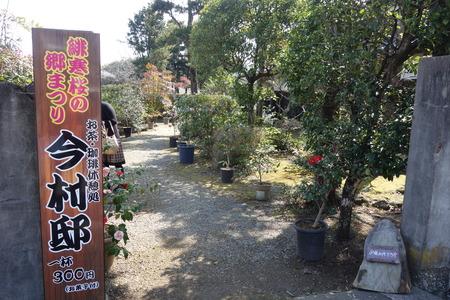 15-国見町神代小路 緋寒桜の郷まつりDSC00395