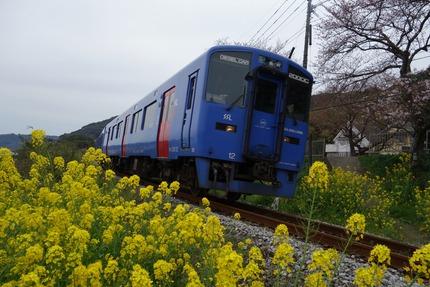 18−国道20号線多良見町古川の桜DSC03597
