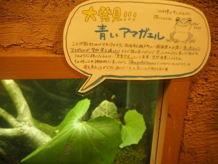 73-長崎バイオパーク 青いアマガエルP6051637