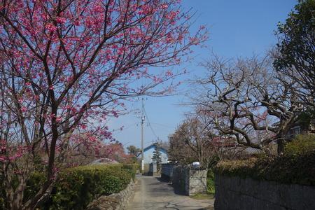 21-国見町神代小路 緋寒桜の郷まつりDSC00420