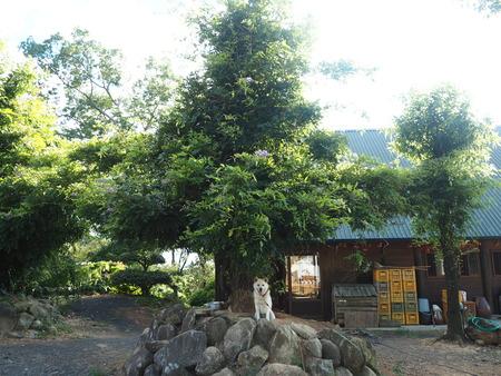 10-南島原市加津佐町 大地牧場のひまわり畑P8126336
