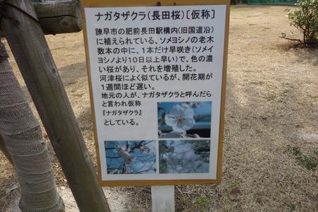 5-運動公園 長田桜DSC07329