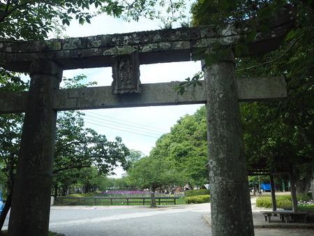 2-大村公園 花菖蒲PP5310015